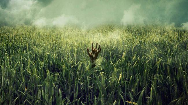 Tall Grass Stephen King