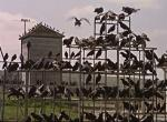 Die Vögel: BBC plant Remake des Klassikers von Alfred Hitchcock