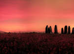 Der Steinkreis in Ackerman's Field